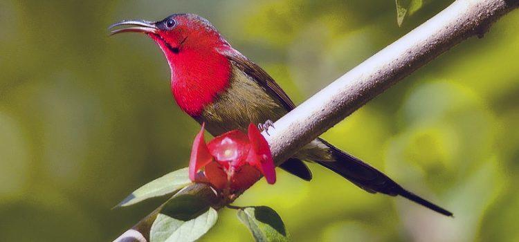 Rwenzori Mountain National Park a Uganda birding safari destination that you never knew of-Uganda Safari News
