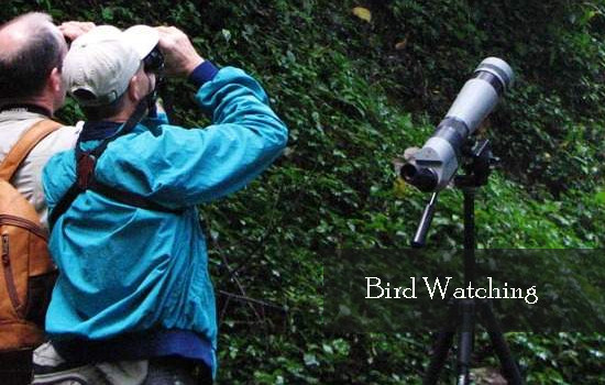 Uganda birding safari destinations for bird lovers! – Uganda safari News