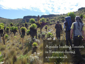 nature-walks-rwenzori