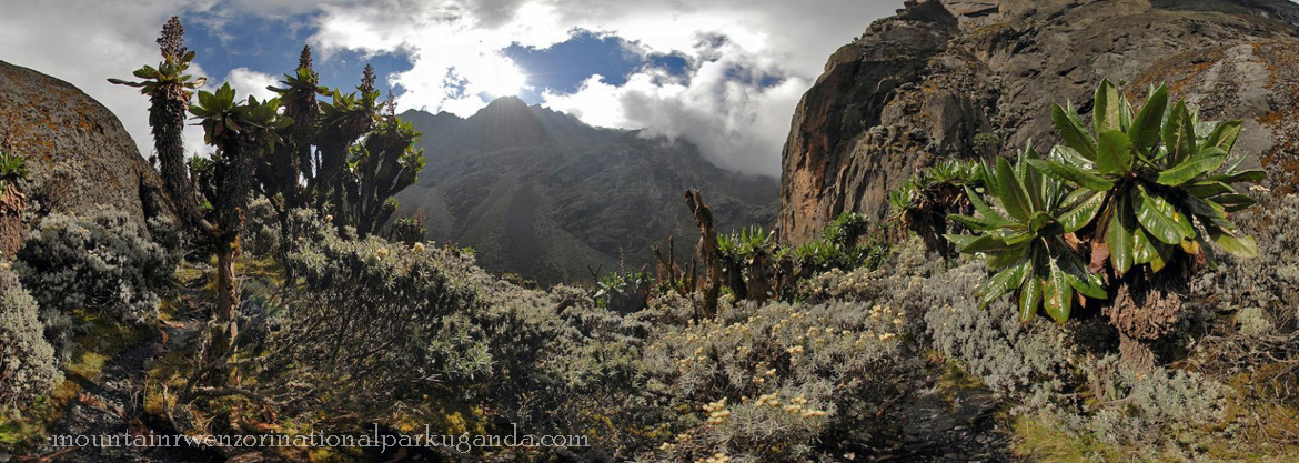 rocks-mount-rwenzori