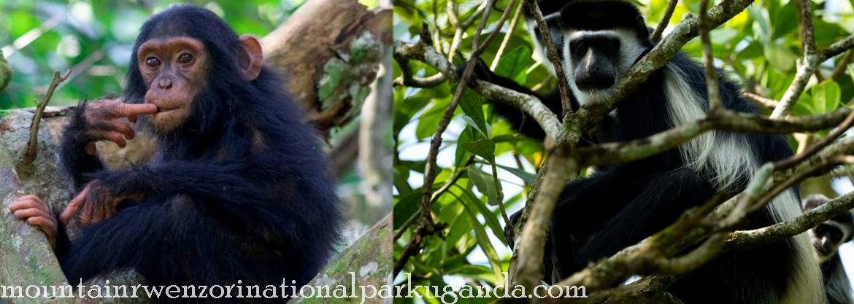wildlife-mount-rwenzori
