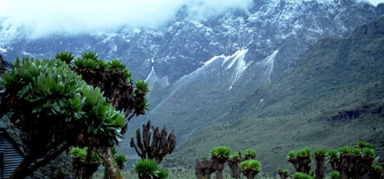 What a fascinating way to trek a mounWhat a fascinating way to trek a mountain Rwenzori with this 9 Days Rwenzori Hiking safaritain Rwenzori!!